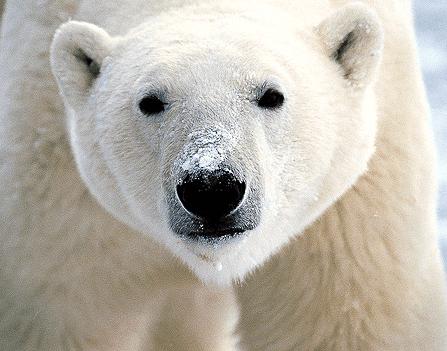 Vi anbefaler at du bestiller bjørnespray fra din nærmeste våpenforhandler.