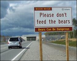Nærkontakt med bjørn er alltid rissikofylt. Unngå bjørn nærmere enn 50 meter