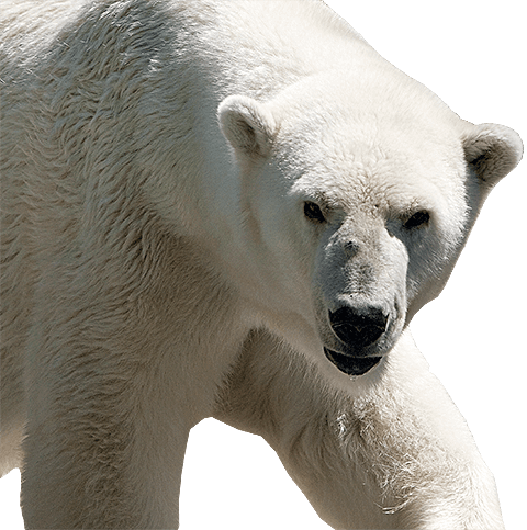 Bedrifter som arbeider i bjørne områder bør jevnlig trene på håndtering av situasjoner med bjørnekonflikter